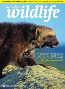 Canadian Wildlife – July-August 2019