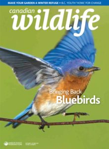 Canadian Wildlife – September-October 2019