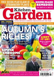 Kitchen Garden – November 2019