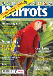 Parrots – October 2019