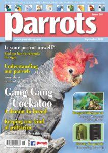 Parrots – September 2019