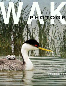 Awake Photography – November 2019