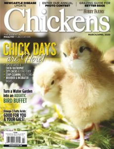 Chickens – March-April 2020