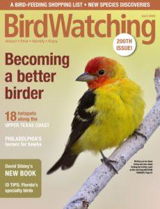 BirdWatching USA – April 2020