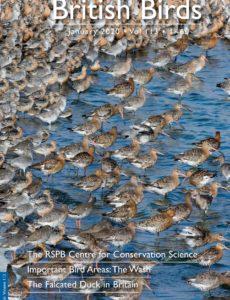British Birds – January 2020