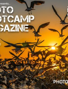 Photo BootCamp – March 2020