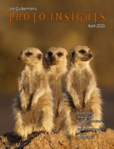 Photo Insights – April 2020