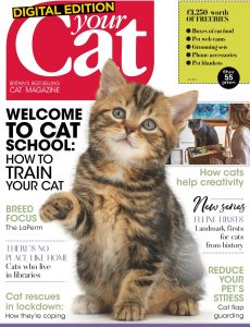 Your Cat – June 2020