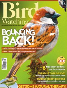 Bird Watching UK – July 2020
