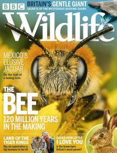 BBC Wildlife – July 2020