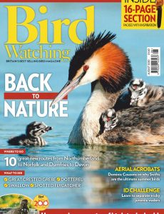 Bird Watching UK – August 2020