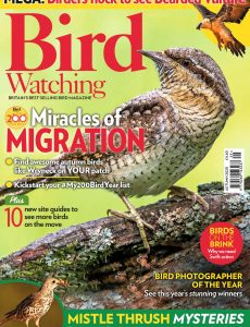 Bird Watching UK – Autumn 2020