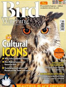 Bird Watching UK – October 2020