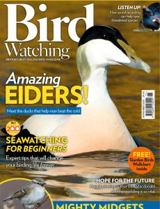 Bird Watching UK – November 2020