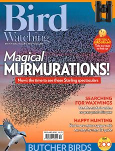 Bird Watching UK – December 2020