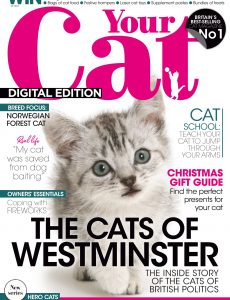 Your Cat – November 2020