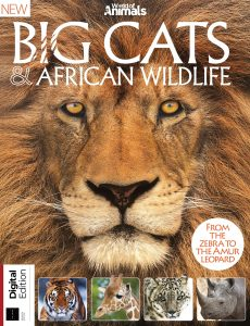 World Of Animals Book Of Big Cats & African Wildlife – 7th Edition, 2021