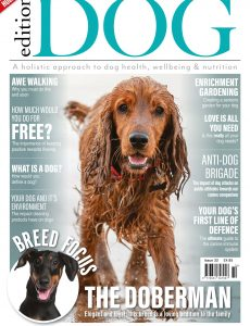 Edition Dog – Issue 32 – May 2021